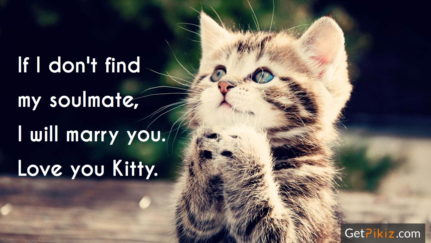 If I don't find my soulmate, I will marry you. Love you Kitty.
